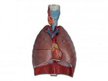 dišni sistem