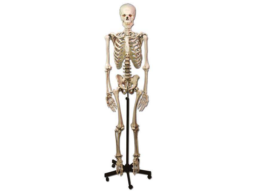 kostur pravi