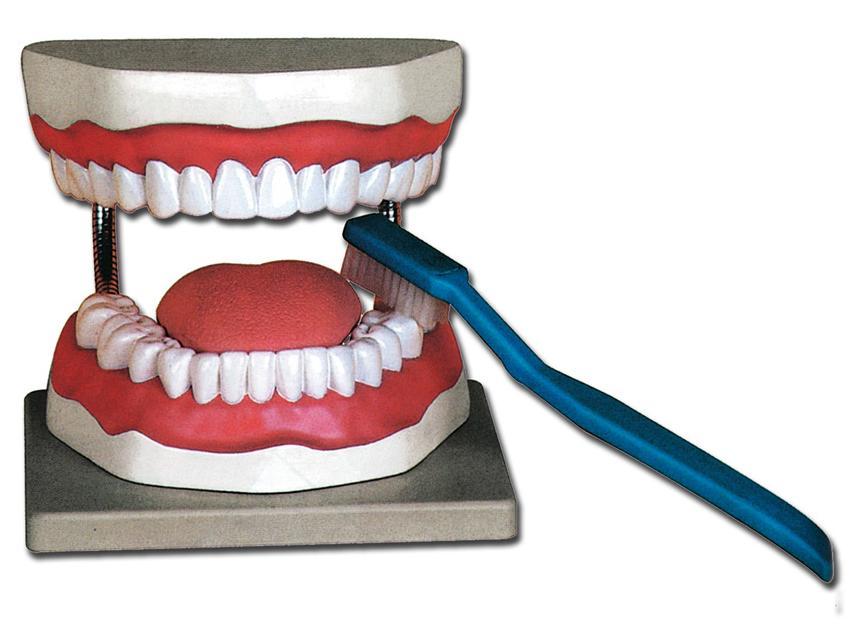 model za oralnu higijenu