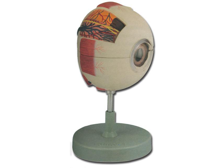 okosa očnom orbitom
