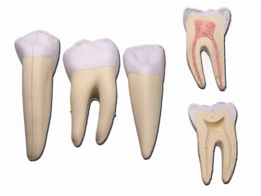 set od 3 zuba