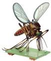 model - komarac