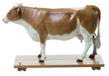 model - krava s kožom