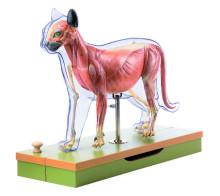 model - mačka s kosturom