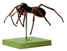 model - mrav