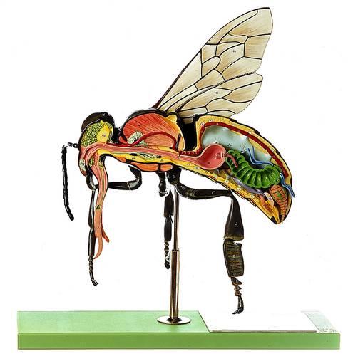 model - pčela