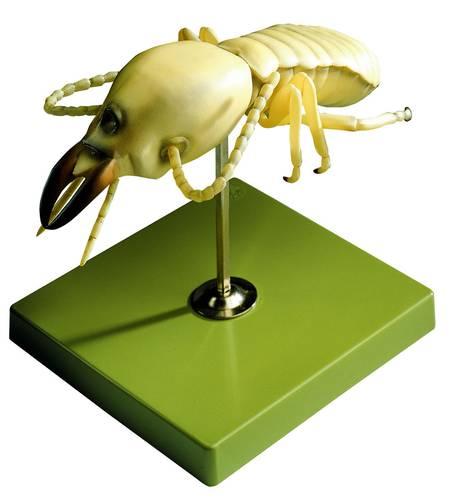 model - termit