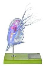 model - vodenbuha