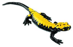 model - zlatni crni daždevnjak