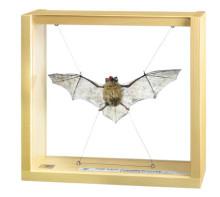 model - šišmiš pipistrelle