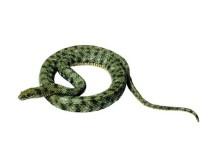 model dice snake