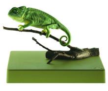 model - kameleon