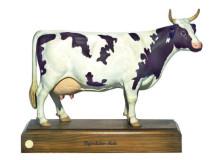 model - krava ayrshire