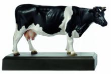 model - krava fresian