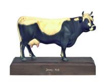 model - krava jersey