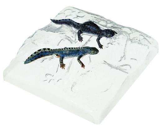 model - planinski vodenjak