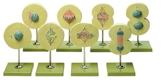 model - podjela stanica