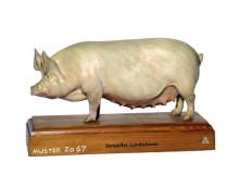 model - svinja enobled
