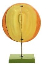 model - zametni disk