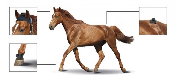 softver-sa-tabletom-za-dijagnozu-hromosti-kod-konja-equinosis