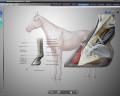softver-za-dijagnostiku-medicinskih-stanja-kod-konja-atlas-2