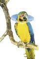 ovratnik-za-papigu-2